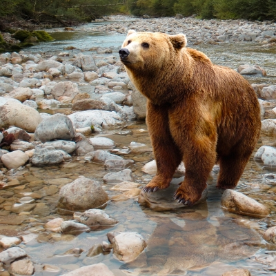 Uwaga! W Wysokich Tatrach niebezpiecznie namnożyły się niedźwiedzie